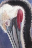 Honorable Mention - The Pelican by Kathleen Franklin