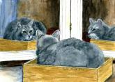 Gray Cat in a Double Mirror by Vykki Mende Gray
