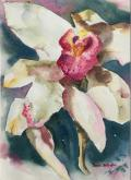 Cymbidium Delight 3 by Sandra Seckington