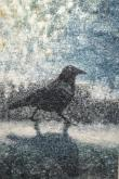 Crow on Ice by Rebecca  McCullough