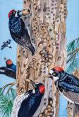 Acorn Woodpeckers by Carol Roberts