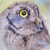 Screech Owl Portrait by Bonnie Rinier