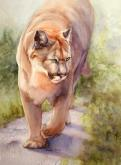 Noble Cougar by Bonnie Rinier