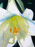 Bursting Lily by Bonnie Rinier