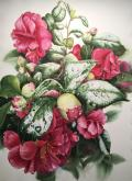 Best of Theme - February Camellias by Janet Gilliland