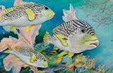 Sweetlips by Carol Roberts