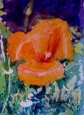California Poppy by Ralph Kingery