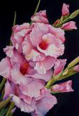 Juror Commendation - Gladiola Joy by Linda Mullen