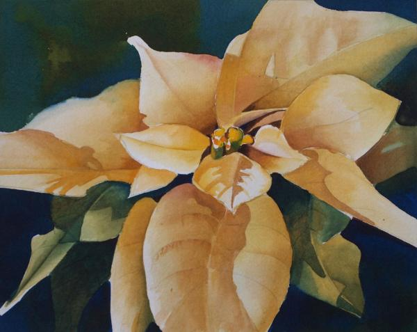 White Poinsettia by Linda Mullen