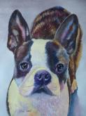 Boston Terrier by Keming Chen