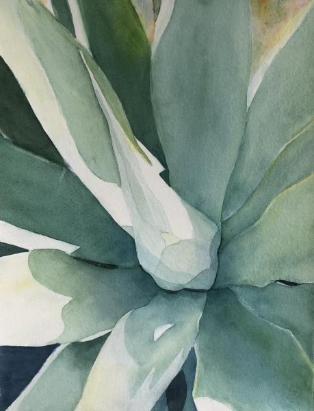Agave by Patti Claassen
