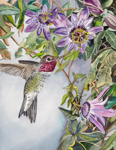 Anna's Hummingbird with Passion Flowers by Carol Roberts