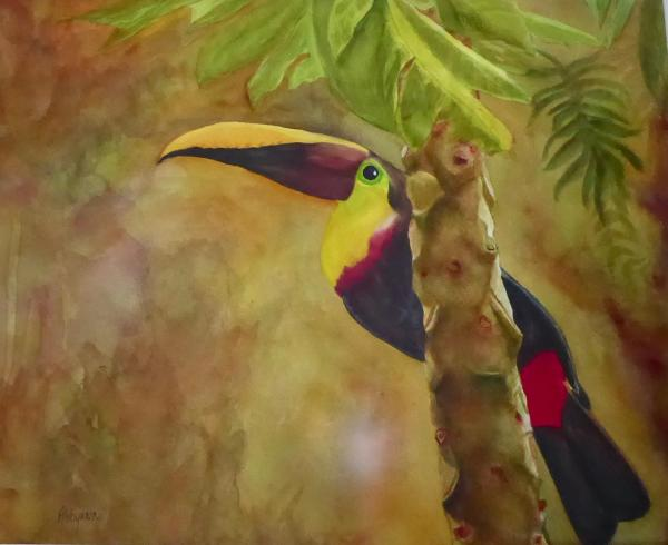 Toucan at Drake Bay by Abbyann Sisk