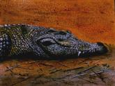 Siamese Crocodile by Vykki Mende Gray
