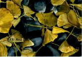 Gingko Leaves and River Rocks by Vykki Mende Gray
