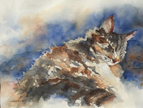 Cat Nap by Sandra Seckington