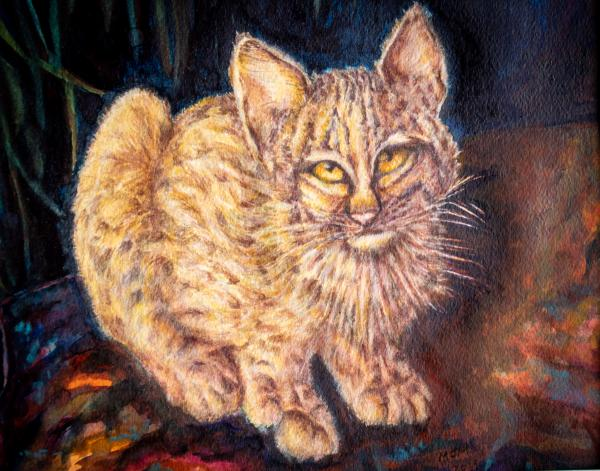 Bobby Kitty by Mary McWilliams