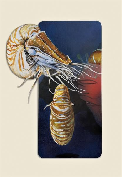 Juror Commendation,  - Pearly Nautilus by Chuck McPherson