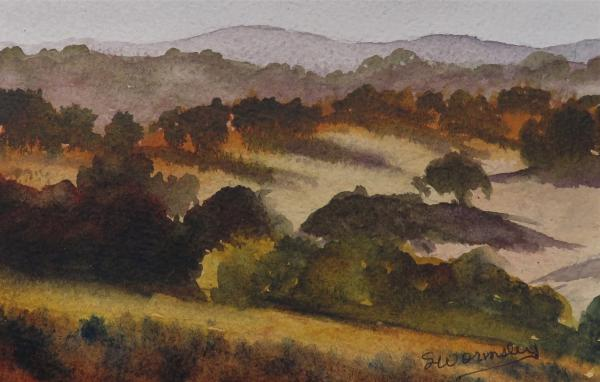 Pine Hills Vista by Susan Wormsley
