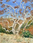 Sycamore tree by Carol Roberts