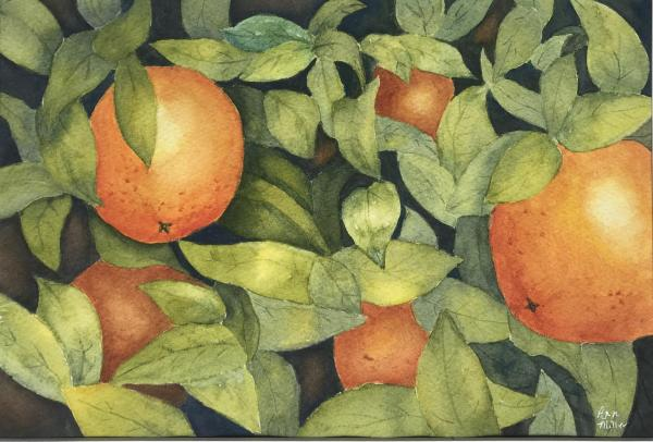 Oranges are in Season by Ann Miller