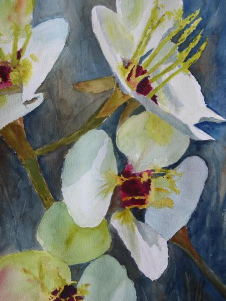 Orchids by Linda Bienhoff