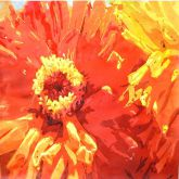 Hot Dahlia by Denise Tverdoch