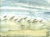 Shorebirds by Susan Weinberg-Harter