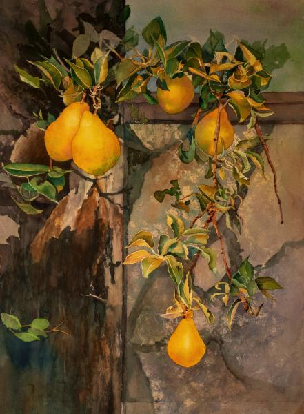 Two Pairs of Pears and a Spare by Becky Hartvigsen