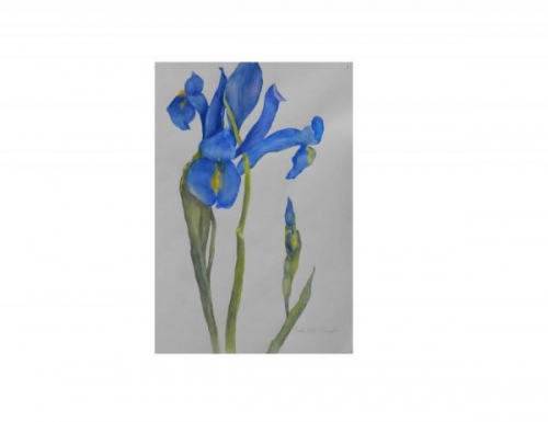 Blue Iris II by Claudia West  Ehrenfeld