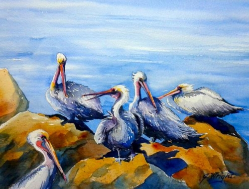 Primping Pelicans by Jami Wright