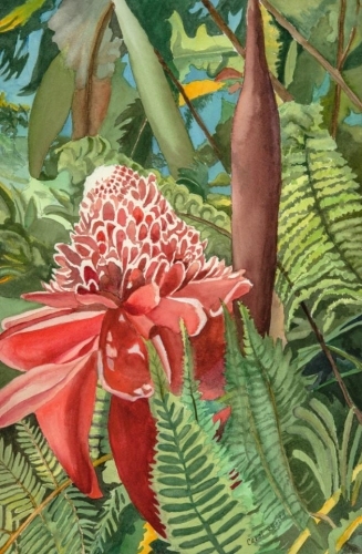 North of Hilo--Torch Ginger by Carol Roberts
