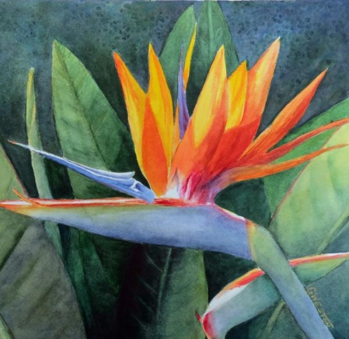 Bird of Paradise #2 by Gay Weston