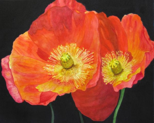 Two Red Poppies by Sandra Carrigan