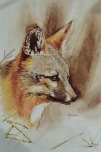 Island Fox by Hollace (Holly) Hagan