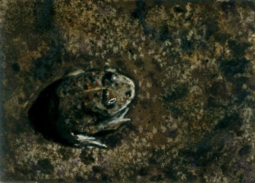 Frog and Camouflage by Vykki Mende Gray