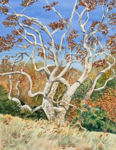 Sycamore at Sweetwater River by Carol Roberts